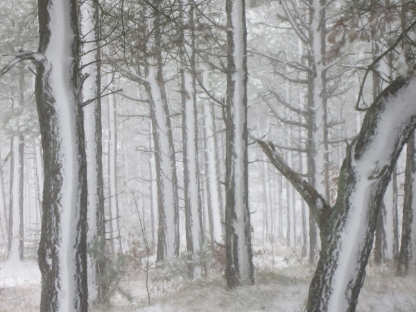Der Wald nach dem Schneesturm (Foto: klw)